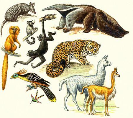 Доклад на тему исчезновение животных и растений 5106